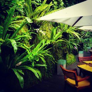 バリのホテルの壁面緑化